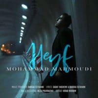 حیف از محمد محمودی